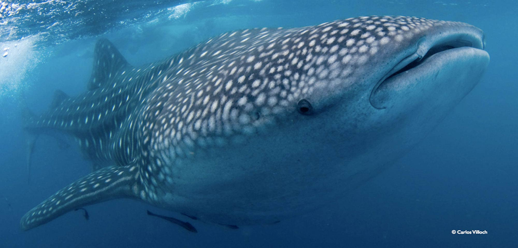 Guided Trip: Tubbataha - Crown Jewel of Philippine Diving